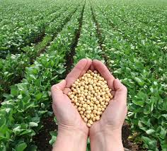 Cover photo for Soybean Economics