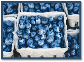 Cover photo for Blueberry Production & Pruning Workshop