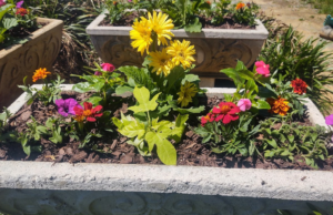 Cover photo for Planting a Concrete Container With Annuals