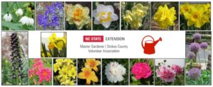 Cover photo for 2020 Fall Bulb Sale
