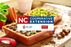 Seed propagation NCCE