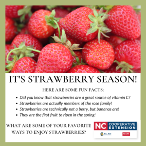 Cover photo for It's Strawberry Season!