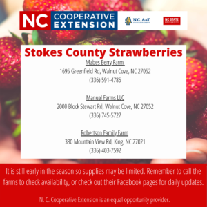 Cover photo for Stokes County Strawberries