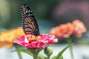 Cover photo for National Pollinators Month