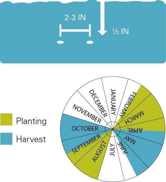 Planting chart