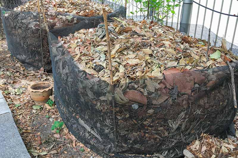 Leaves in composting bin